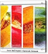 Sweet Pepper Watercolor Acrylic Print