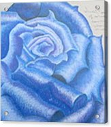 Sweet Roses Be Acrylic Print