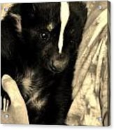 Sweet Sleepy Skunk Acrylic Print