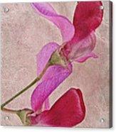 Sweet Textures 2 Acrylic Print