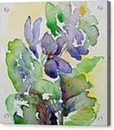 Sweet Violets Acrylic Print