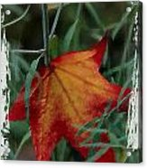Sweetgum Leaf Acrylic Print