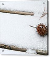 Sweetgum Seed Pod In The Snow Acrylic Print