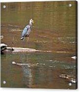 Sweetwater Creek Heron Acrylic Print