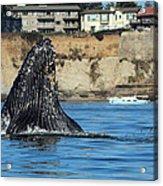 Swim Away Acrylic Print