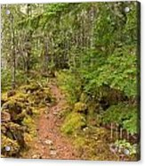 Swim Lake Trail Acrylic Print