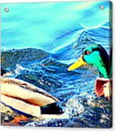 Some Ducks Are Just Happily Swimming With Their Team  Acrylic Print