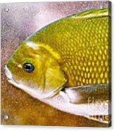 Swimming Fish  Acrylic Print