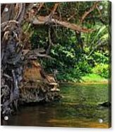 Swimming Hole Acrylic Print