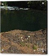 Swimming Hole  Acrylic Print by Tim Rice