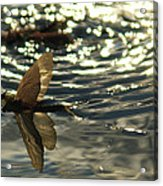 Swimming In The Light Acrylic Print