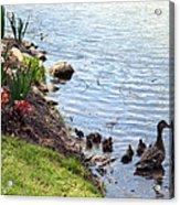 Swimming Lessons Acrylic Print