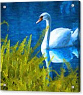 Swimming Swan And Ferns Acrylic Print
