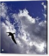 Swimming Through The Sky Acrylic Print