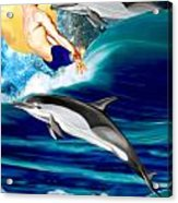 Swimming With Dolphins Acrylic Print