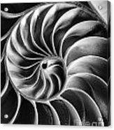 Swirl IIi Acrylic Print