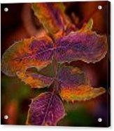 Swirling Leaves Acrylic Print