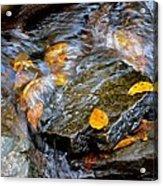 Swirling Stream Of Leaves  Acrylic Print