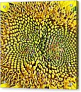 Swirling Sunflower Bloom Acrylic Print