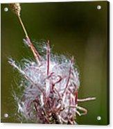 Swirling Wildflower Acrylic Print