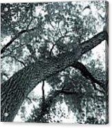Swirly Tree Acrylic Print