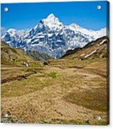 Swiss Alps - Schreckhorn And Valley Acrylic Print