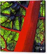 Swiss Chard Acrylic Print