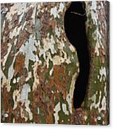 Sycamore Camouflage Acrylic Print