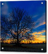 Sycamore Sunset Acrylic Print