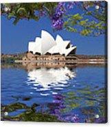 Sydney Opera House with jacaranda reflection Acrylic Print