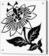 Symbol Passion Flower Acrylic Print