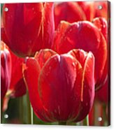 Symbolic Tulips Acrylic Print