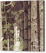 Symmetrical Evergreens  Acrylic Print