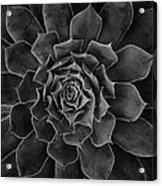 Symmetrical Succulent Acrylic Print