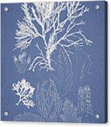 Symphocladia Gracilis  Acrylic Print by Aged Pixel