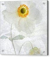 Symphony Acrylic Print