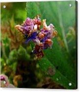 Synchlora Aerata Caterpillar 2 Acrylic Print