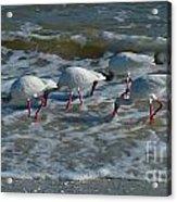 Synchronized Beach Combing Acrylic Print