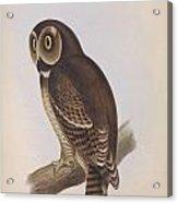 Syrnium Owl Acrylic Print