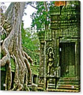 Ta Prohm And Tree Invasion In Angkor Wat Archeologial Park Near Siem Reap-cambodia Acrylic Print
