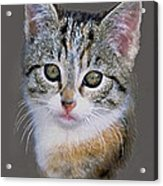 Tabby  Kitten An Original Painting For Sale Acrylic Print