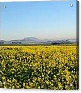 Table Mountain At The Horizon Acrylic Print