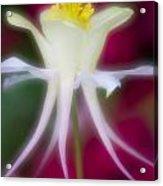 Tadpole Flower Acrylic Print