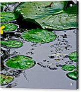 Tadpole Haven Acrylic Print by Frozen in Time Fine Art Photography