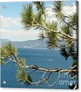 Tahoe Through The Pines Acrylic Print