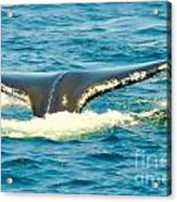 Tail From The Deep Acrylic Print