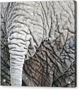 Tail Of African Elephant Acrylic Print
