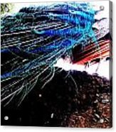 Tail Of Peacock Acrylic Print
