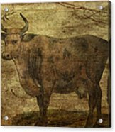 Take The Cow By The Horns Acrylic Print
