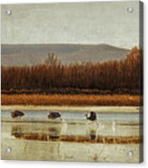 Takeoff Of The Cranes Acrylic Print